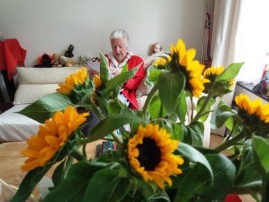 anet thh zonnenbloemen